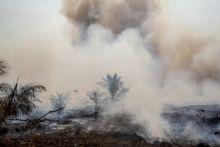 hutan-terbakar-potensi-keragaman-hayati-pun-musnah
