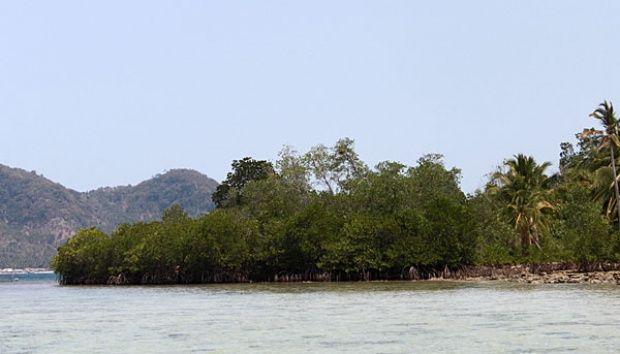 Menikmati Keindahan Bawah Laut Pulau Pahawang Lampung