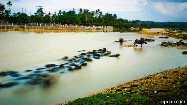 Jalan-jalan ke Muara Lembu: Menyusuri Alam hingga Budaya