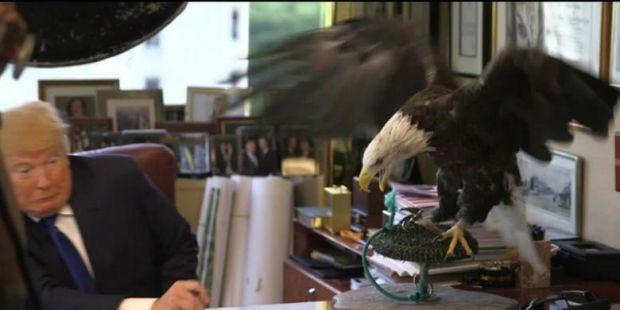Oalah, Wajah Donald Trump Hampir Dipatuk Elang Botak saat Sesi Pemotretan