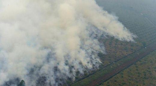 Inilah Sejumlah Keganjilan pada SP3 untuk 15 Perusahaan Terduga Pembakar Hutan...