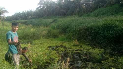 Disinyalir Tidak Hanya Buang Limbah Cair PKS ke Sungai Andan, PT Gandaerah Hendana Juga Diduga Timbun Sungai Ukui Pelalawan dengan Tandan Kosong