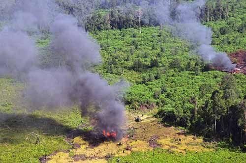 Tak Dikenakan Status Kejahatan Perusahaan, KPK akan Buka Kasus yang Sudah Berkekuatan Hukum Terkait Lingkungan Hidup di Riau