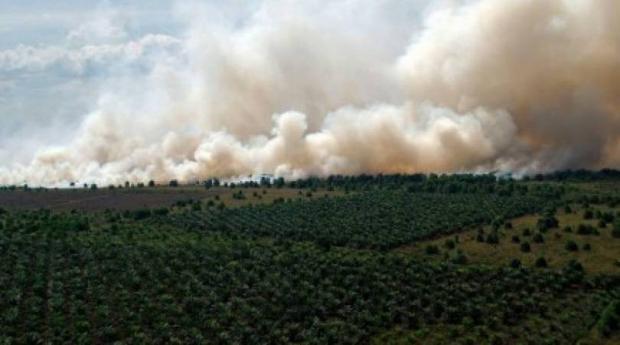 Duh, PT Jatim Jaya Perkasa di Rokan Hilir Persoalkan Data yang Digunakan KLHK dalam Persidangan Perkara Kebakaran Hutan