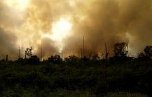 hutan-pulau-rupat-terbakar-bpbd-riau-belum-dapat-info