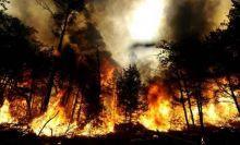 waduh-baru-beberapa-hari-panas-terik-titik-api-mulai-bermunculan-di-bengkalis