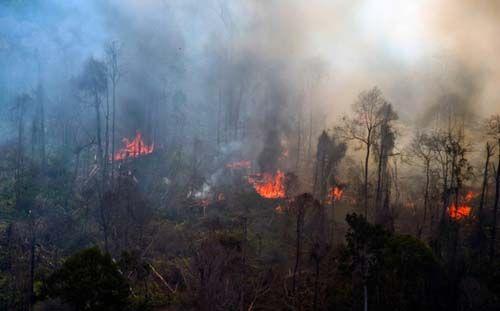 Hutan Lindung Bukitbetabuh di Kuansing Terbakar