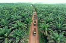 pemprov-bilang-12-juta-hektar-kebun-sawit-di-riau-ilegal-azlaini-agus-selama-ini-pemerintah-ke-mana