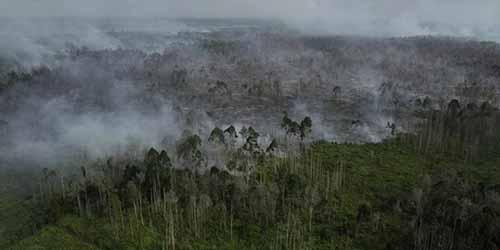 Tahun Ini, Besarkah Potensi Kebakaran Hutan dan Lahan di Indonesia?
