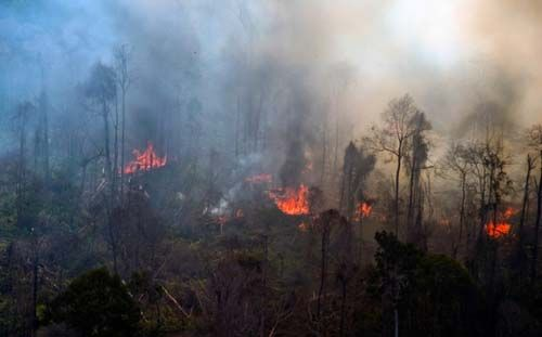 Api di Hutan Lindung Bukitbetabuh yang Masuk Kawasan Kuansing Riau Sudah Padam, yang Masuk Wilayah Sumbar Masih Membara