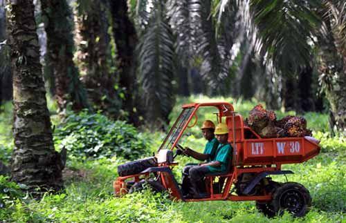 Harga CPO di Kaltim Kian Kinclong, Salip Riau