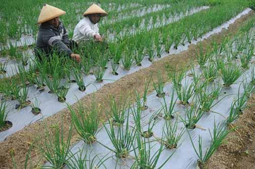 Riau dan Sumut Berkontribusi Besar dalam Menciptakan Surplus Neraca Perdagangan dari Ekspor Sawit
