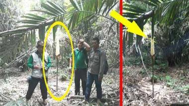 Download 71+ Gambar Macam Macam Bunga Bangkai Gratis Terbaru