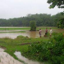 banjir-di-riau-petani-kuansing-alami-kerugian-paling-besar
