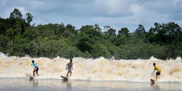 Kapan Waktu Terbaik Menjajal Ombak Bono di Hilir Sungai Kampar Kabupaten Pelalawan?