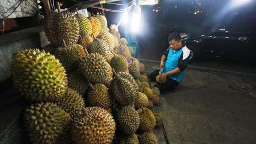 Ayo ke Pekanbaru, karena di Sini Durian Berbuah Sepanjang Waktu…