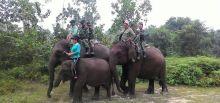 mantap-tim-kostrad-patroli-kebakaran-hutan-di-riau-dengan-menunggangi-gajah