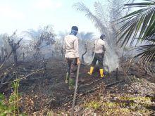 lahan-gambut-seluas-5-hektar-di-siak-terbakar-lagi