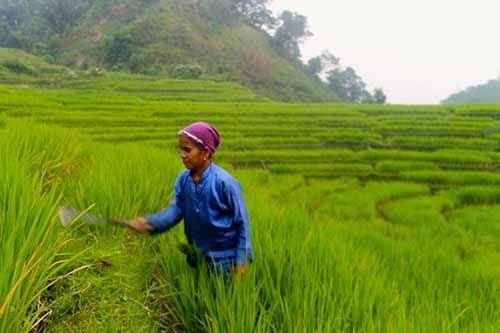 Dua Provinsi Ini Masih Pengaruhi Pasokan Beras Pekanbaru