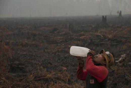 Anggota Panja Karhutla DPR RI Minta SP3 Perusahaan Terduga Pembakar Hutan Riau Dianulir
