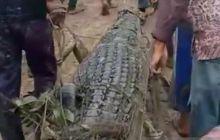 buaya-yang-diduga-pemangsa-nelayan-kabupaten-meranti-ditangkap-saat-dibelah-isi-perutnya