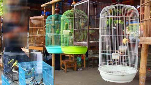 Gara-gara Burung, Pegawai Hononer di Pekanbaru Tertipu Jutaan Rupiah