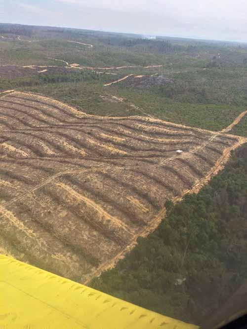 Kejati Riau Minta Keterangan Sejumlah Saksi dalam Kasus Jual Beli Ratusan Hektar Lahan Taman Nasional Tesso Nilo